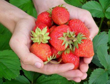 Frutas reduzem risco de morte segundo estudo